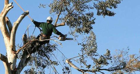 Anatomy Of Tree Service